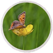 A Small Copper Butterfly (lycaena Round Beach Towel
