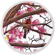 A Songbird In The Magnolia Tree - Square Round Beach Towel
