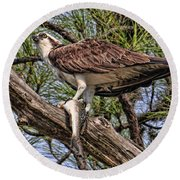 Round Beach Towel featuring the photograph A Speckled Trout Breakfast by HH Photography of Florida