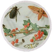 A Sprig Of Redcurrants With An Elephant Hawk Moth, A Magpie Moth And Other Insects, 1657 Round Beach Towel