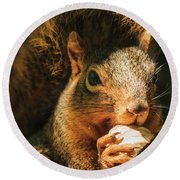 A Squirrel And His Nut Round Beach Towel