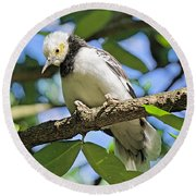 A Starling To Remember Round Beach Towel