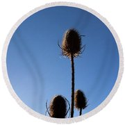 Round Beach Towel featuring the photograph A Thriving Trio 2 by Helga Novelli