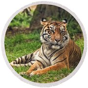 A Tiger Relaxing On A Cool Afternoon Round Beach Towel