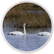 A Trio Of Swans Round Beach Towel