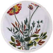 A Variety Of Double Flowered Yellow Poppy Round Beach Towel