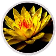 A Water Lily Round Beach Towel