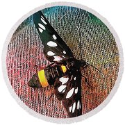 A Yellow Belted Burnet Round Beach Towel