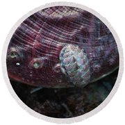 Round Beach Towel featuring the photograph Abalone And Chiton by Adria Trail