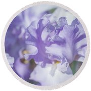 Absolute Treasure Closeup. The Beauty Of Irises Round Beach Towel