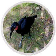 Abssynnian Ground Hornbill Round Beach Towel