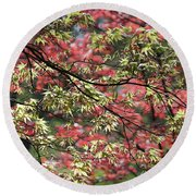 Acer Leaves In Spring Round Beach Towel