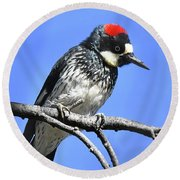 Acorn Woodpecker Close Round Beach Towel
