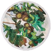 Acorns On An Oak  Round Beach Towel