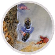Round Beach Towel featuring the photograph Adopted Amphibian by Al Powell Photography USA