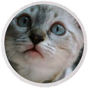 Round Beach Towel featuring the photograph Adorable Kitty  by Kim Henderson