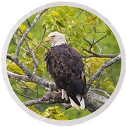 Adult Bald Eagle Round Beach Towel