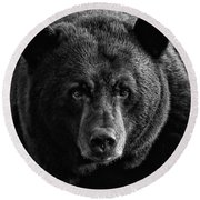 Round Beach Towel featuring the photograph Adult Male Black Bear by Coby Cooper