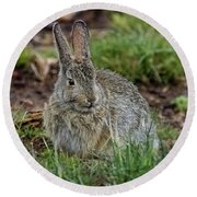 Adult Rabbit Grazing Round Beach Towel