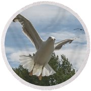 Adult Seagull In Flight Round Beach Towel