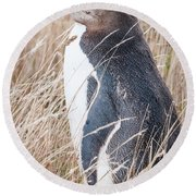 Adult Yellow-eyed Penguin 2 Round Beach Towel