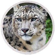 Adult Snow Leopard Portrait Round Beach Towel