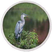 Round Beach Towel featuring the photograph Advice From A Great Blue Heron by Cindy Lark Hartman