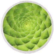 Aeonium Tabuliforme Pattern Round Beach Towel
