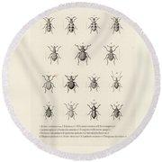 Round Beach Towel featuring the drawing African Beetles by Bernhard Wienker
