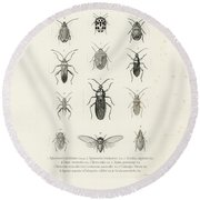 African Bugs And Insects Round Beach Towel