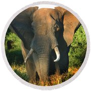 African Bull Elephant Round Beach Towel