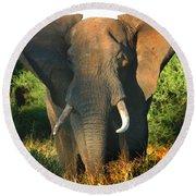 African Bull Elephant Round Beach Towel by Joseph G Holland