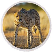 African Cheetah Round Beach Towel by Inge Johnsson