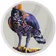 African Crowned Eagle  Round Beach Towel by Anthony Mwangi