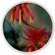 African Fire Lily Round Beach Towel