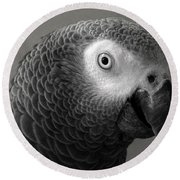 African Gray Round Beach Towel by Sandi OReilly
