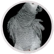 African Grey Parrot Round Beach Towel