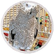 African Grey Parrot In Pencil Round Beach Towel