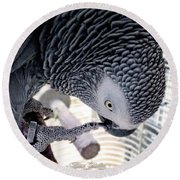 African Grey Parrot Round Beach Towel by Melissa Messick