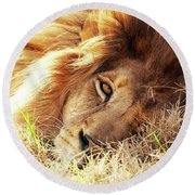 African Lion Closeup Lying In Grass Round Beach Towel
