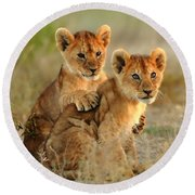 African Lion Cubs Round Beach Towel