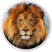 African Lion 1 Round Beach Towel