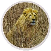 African Lion In Camouflage Round Beach Towel