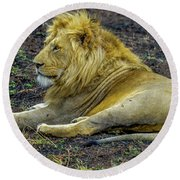 African Lion Resting Round Beach Towel