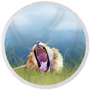 African Lion Yawning In Tall Grass Round Beach Towel