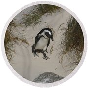 African Penguin On A Mission Round Beach Towel