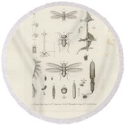 African Termites And Their Anatomy Round Beach Towel