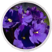 Round Beach Towel featuring the photograph African Violets by Phyllis Denton