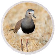 African Wattled Lapwing Vanellus Round Beach Towel by Panoramic Images