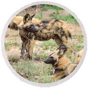 African Wild Dogs Round Beach Towel